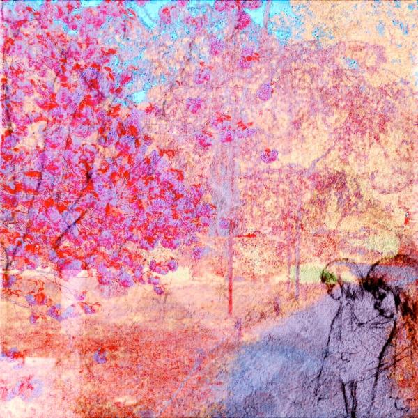 Hide's Sakura